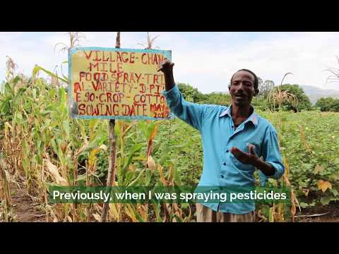 Farming without pesticides in Ethiopia
