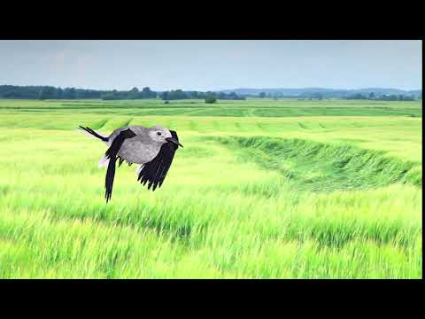 BirdCam: AR Bird Sighting Of A Clark's Nutcracker