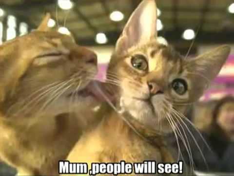 Very Funny Cats 74- .MP4_mandalaindra@yahoo.co.id
