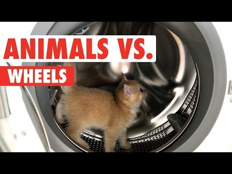 Animals vs. Wheels | Funny Pet Compilation 2017