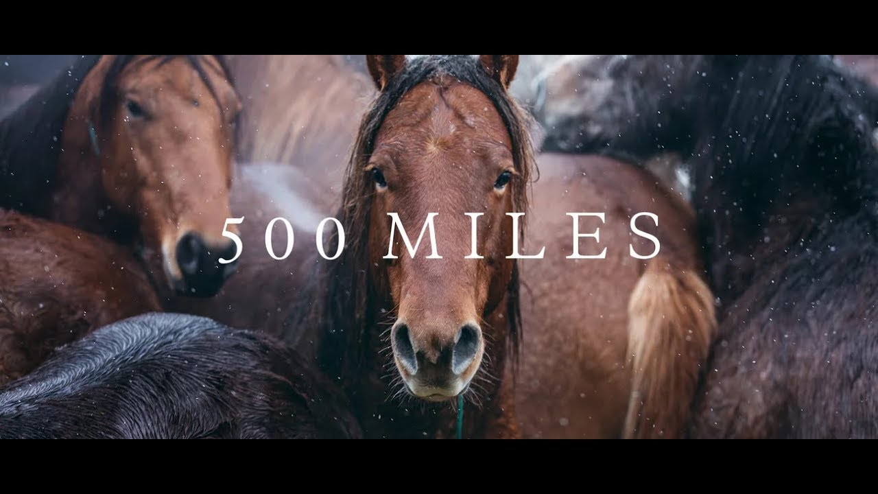 Ver 500 Miles – The Story of Ranchers and Horses (2017) en Español