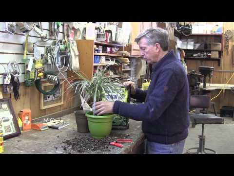 How to RePot a Tropical Plant