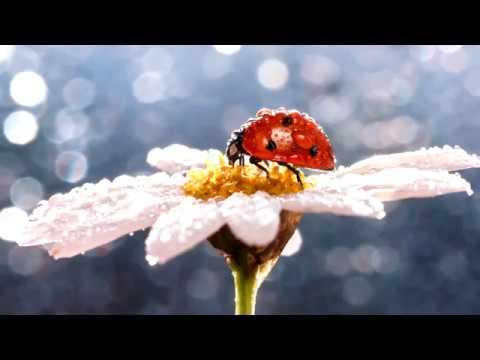 Солнечное утро. Музыка Сергея Чекалина. Sunny Morning.  Music By Sergei Chekalin.