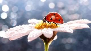 Download Солнечное утро. Музыка Сергея Чекалина. Sunny morning.  Music by Sergei Chekalin. Mp3 and Videos