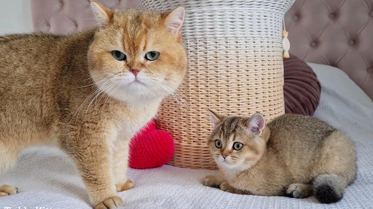 Cat William met his beautiful daughter Toffee