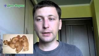 Дети Фауны трейлер