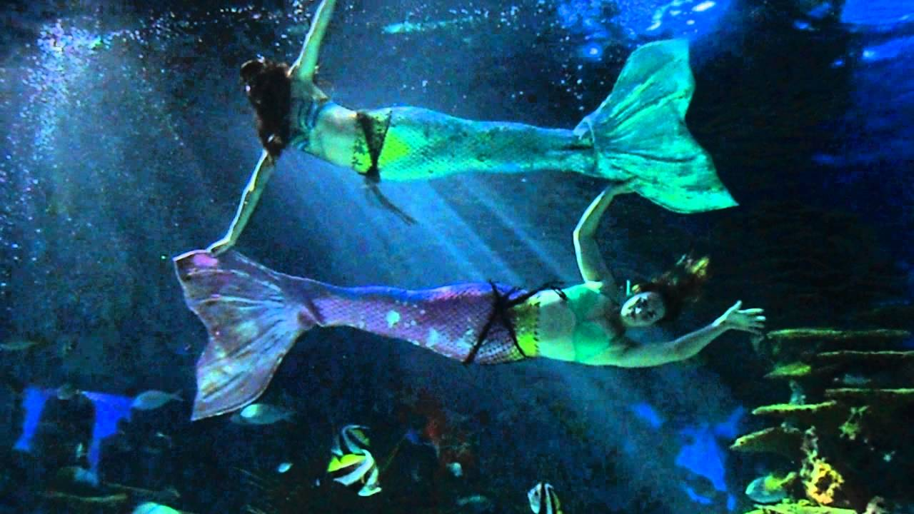 gatlinburg, ripley's aquarium mermaids (allison and rachel) - youtube