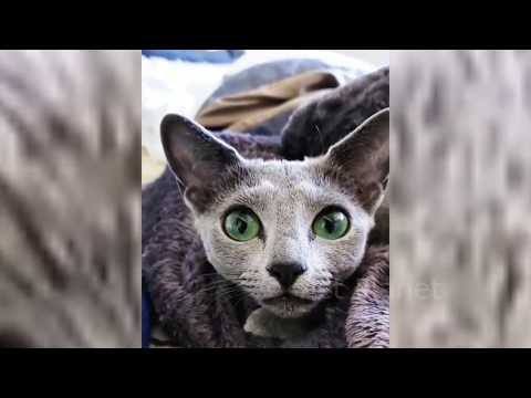 Funny Cats Fails Compilation (Vines, Fails and Funny Moments)
