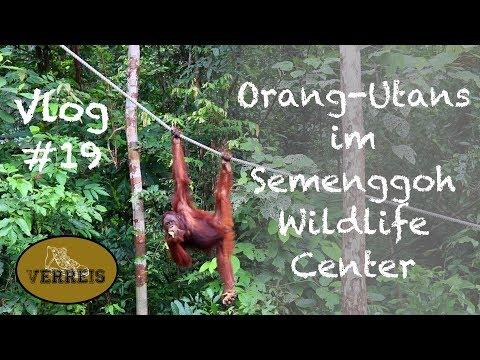 Vlog #19 ✦ Orang-Utans in Borneo ✦ Semenggoh Wildlife Center ✦🇲🇾 Malaysia 🇲🇾✦