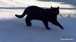 Черный кот идет по ослепительно белому снегу! Проводка.