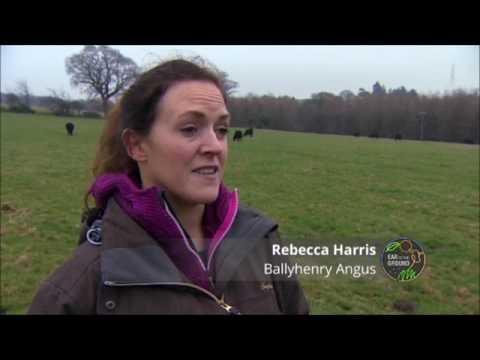 Ballyhenry Angus Organic Farm on Ear to the Ground FULL Story