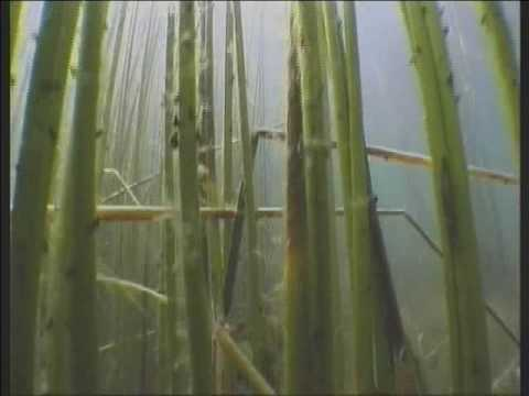 Diving in Lake Titicaca in search for the holy frog Kaira.wmv