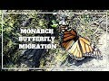 MONARCH BUTTERFLY MIGRATION 2019: Things to do in Mexico City