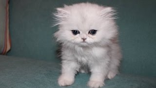 One of GamingWithJen's most viewed videos: OUR NEW KITTEN CLOUD!!!