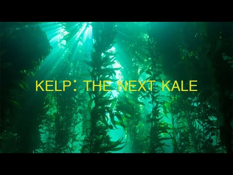 Marine Plants Can Save the World | Part 2: Kelp