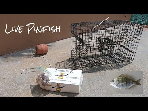 How To Catch Live Pinfish! | Hook/Line And Pinfish Trap Tutorial On Our Jon Boat