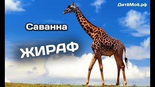 Жираф. Энциклопедия для детей про животных. Саванна