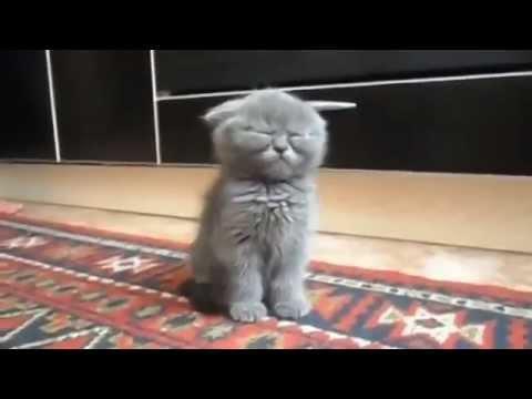 Кот который спит на капоте
