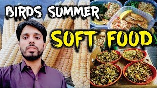 Fresh Corn (Soft Food) For Your Birds | Keeping Your Bird Safe in the Hot Summer screenshot 4