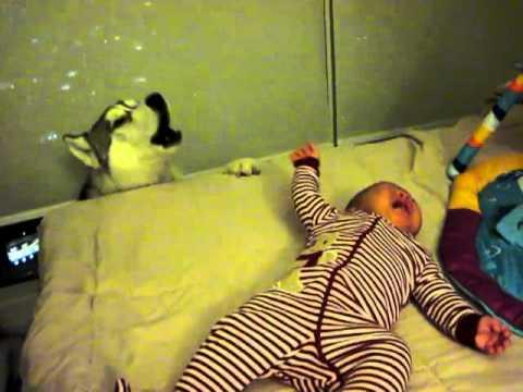 Husky singing to baby Cameron