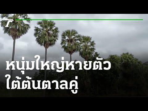 หนุ่มใหญ่หายตัวใต้ต้นตาลคู่ | 29-05-64 | ข่าวเช้าไทยรัฐ เสาร์-อาทิตย์