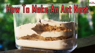 how to keep ants