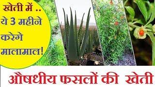 जून जुलाई अगस्त की खेती   Top Medicinal plants farming Business   औषधीय फसलों की  खेती