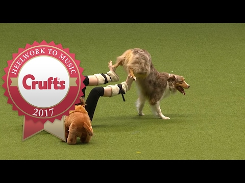 Heelwork To Music - International Freestyle Competition Part 3/3 | Crufts 2017