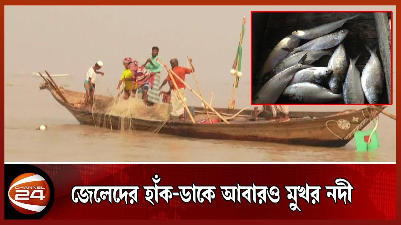 ২২ দিনের নিষেধাজ্ঞা শেষে নদীতে ইলিশ ধরা শুরু | Channel24