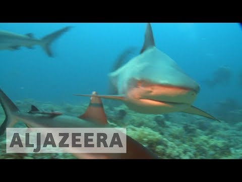 US: Anger grows over shark fin trade