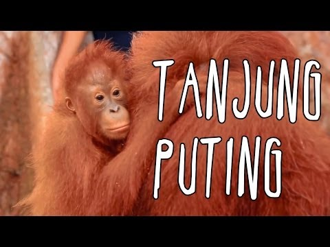 [INDONESIA TRAVEL SERIES] Jalan2Men 2014 - Tanjung Puting -
