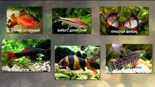Совместимость и содержание аквариумных рыбок! Как подобрать рыбок