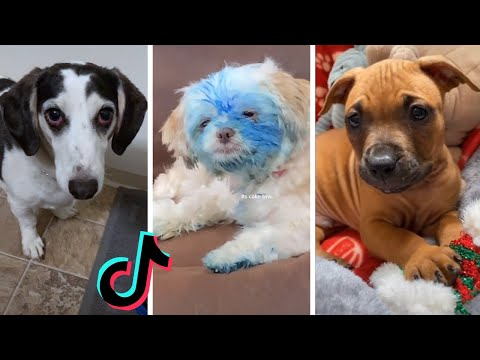 TIK TOK Doggos That Will Make You Laugh ~ Cutest Puppies ~ Funny Dogs of TikTok!
