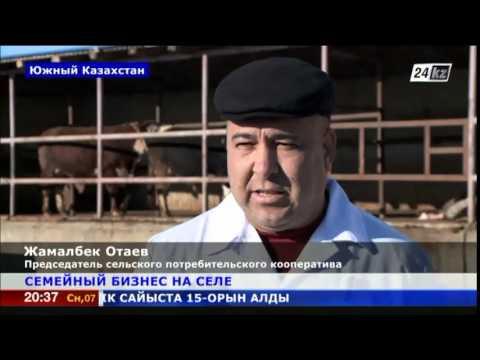казахстан чимкент знакомства