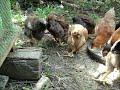 Chicken kabir by er anasco