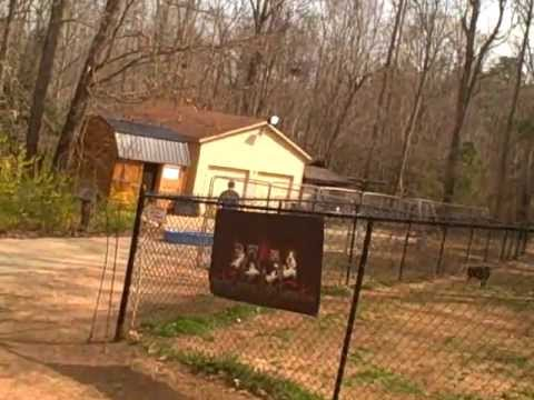 A DAY AT CAROLINA BULLY FARMS
