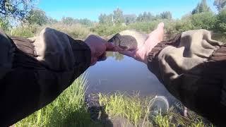 Ловля карася На поплавочную удочку и фидер Рыба не хотела клевать но я подобрал к ней ключик