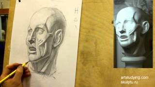 Экорше (5). Обучение рисунку. Портрет. 34 серия
