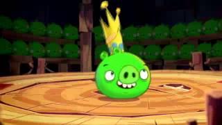 Злые птицы - Свиньи таланты / Angry Birds - Pig talent