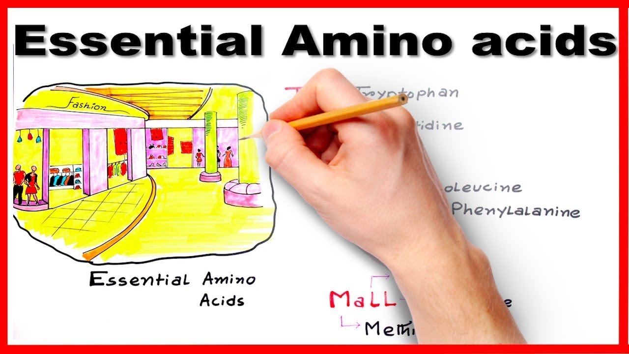 essential amino acids easiest way to remember mnemonic