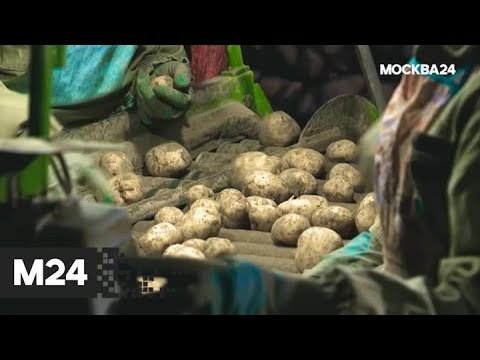 """""""Городской стандарт"""": картофель - Москва 24"""