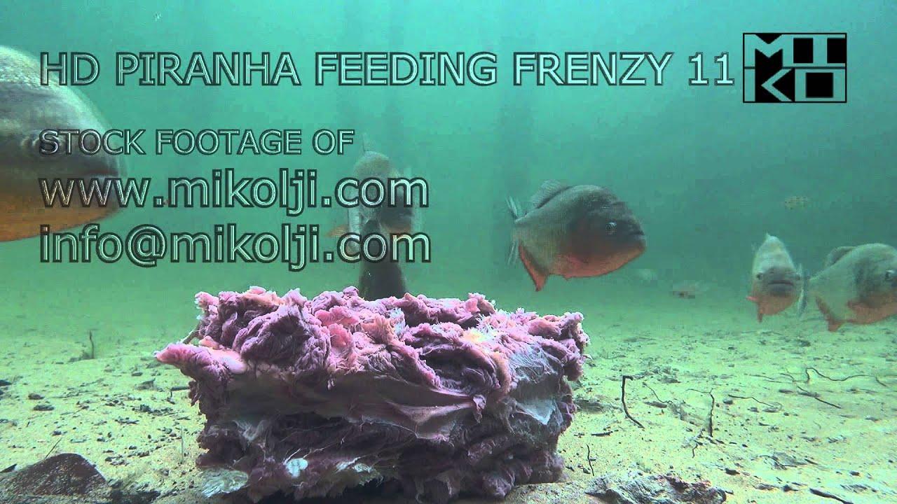 hd piranha feeding frenzy 11 - youtube