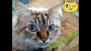 Котенька кот лапа, сама нежность