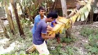 Must Watch Funny😂😂Comedy Videos 2019    R M Tube Click   