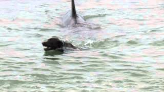 Orca encounter with diver & dog (Matheson Bay, New Zealand) thumbnail