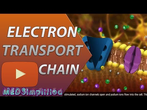 Electron Transport Chain ETC Made Easy