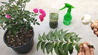 Natural and free pesticide for any plants | Garlic and neem pesticide