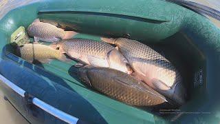#Ritterfishing #Карпфишинг #Сазан ШОК!!! Огромные САЗАНЫ сошли с ума! Рыбалка с подписчиком.
