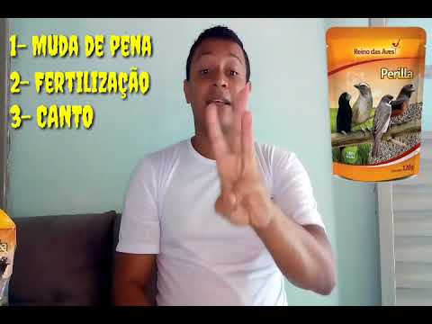 OS BENEFÍCIOS DA PERILLA PARA COLEIRO OU PAPA-CAPIM / PAPO DE COLEIRO