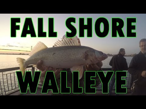 JIGGING FALL WALLEYE FROM SHORE - ABSOLUTE SLAYFEST!!!